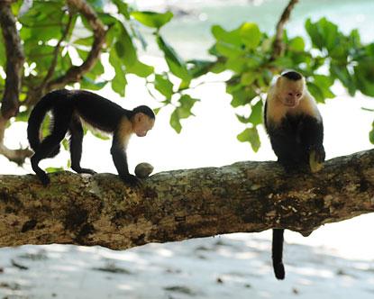Monkeys, sloths & birds are awaiting your arrival!